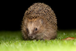 Hedgehog and a Slug