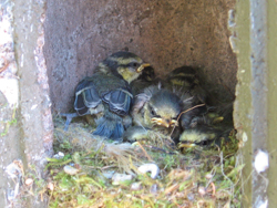 Fledgling Nest Box