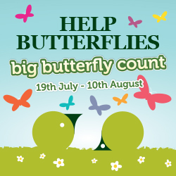 Big Butterfly Count Logo