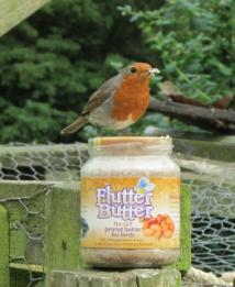 Robin with Flutter Butter