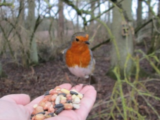 Robin on Hand