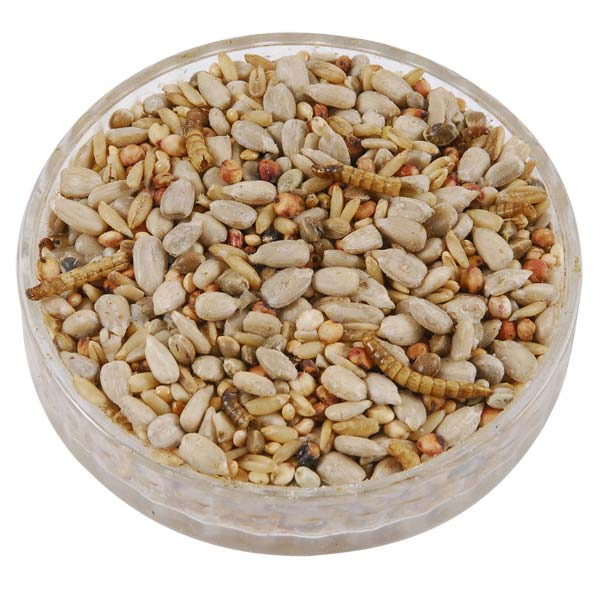 Ark Hearty Mealworm Mix