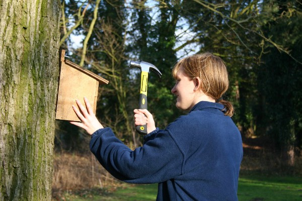 Putting up a bird nest box